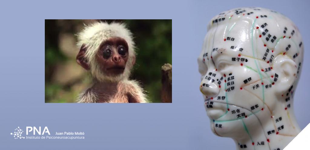 Que nos pueden enseñar los monos sobre política.
